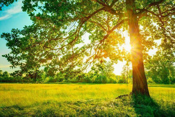 光に包まれる草原と木