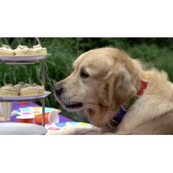 Small Crop Of Dog Birthday Party