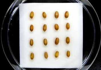 Osmotic and salinity effects on germination