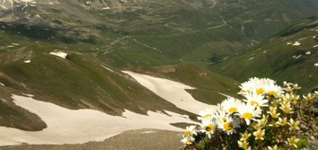 Apomixis is not prevalent in a high-alpine ecosystem