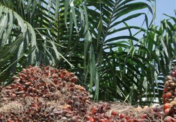 Epigenetic floral variant of clonal oil palm (Review)