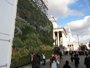 Living wall in front of the National Gallery, London