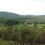 An important ecosystem: the Cerrado in Brazil