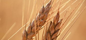 There's more to crops than simply what's in their genome.