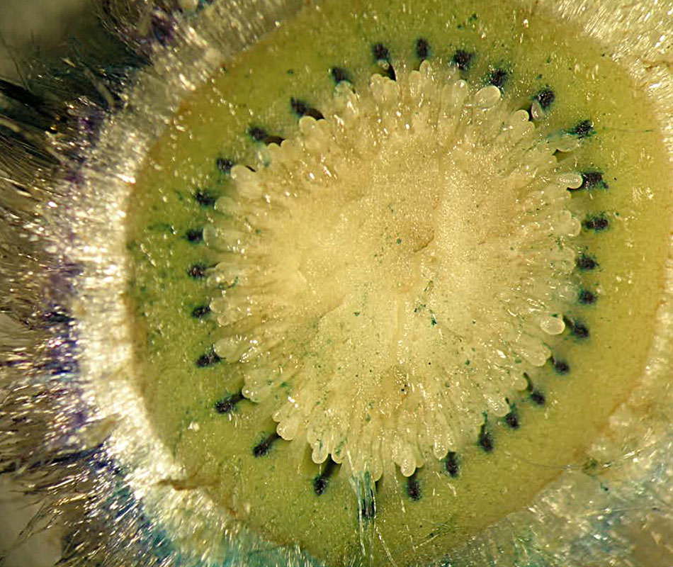 Inside the Kiwi fruit for July's cover image