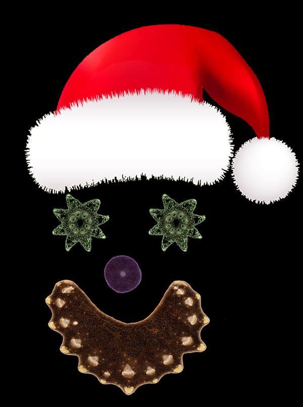 Santa Cells