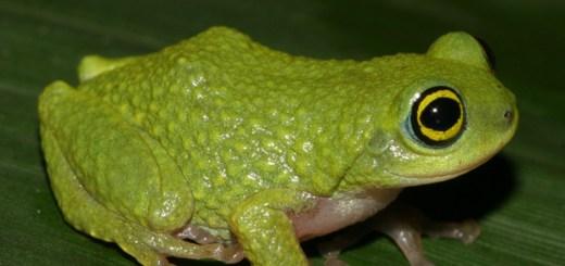 Image: David Raju, India Biodiversity Portal, http://indiabiodiversity.org. [http://indiabiodiversity.org/species/show/28371]