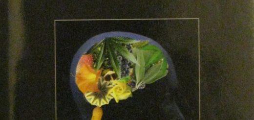Plants&HumanBrain-Cover
