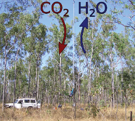 Open forest savanna at Howard Springs. Model assumes optimised water use for maximum net carbon profit of seasonal and perennial vegetation. (Photo credit: Stanislaus Schymanski et al.)