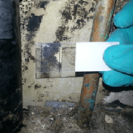 Mold testing in Singapore