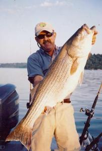 Beaver Lake Striper