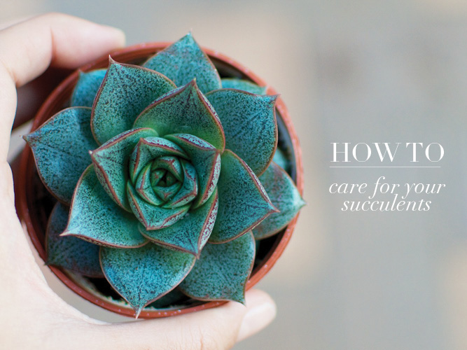 How To: Care For Your Succulents | A Pair & A Spare