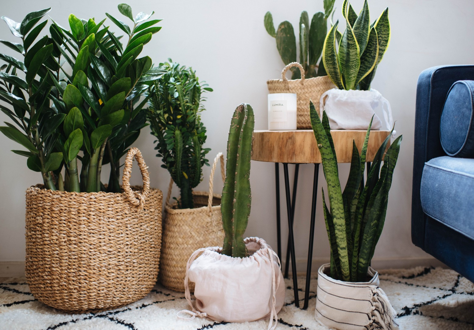 Indoor Plants A Guide To The Best Air Purifying Indoor Plants A Pair A Spare