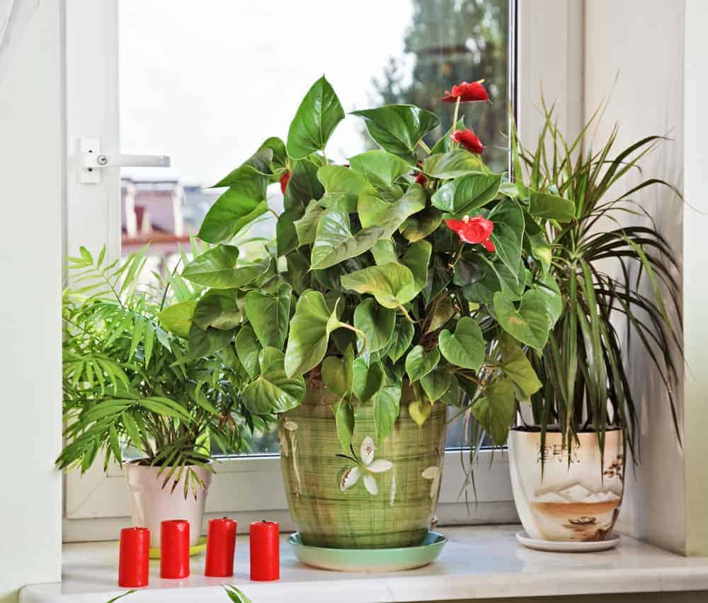Small House Plants With Flowers 5 Easy Flowers To Grow In Small Spaces Apartmentguide