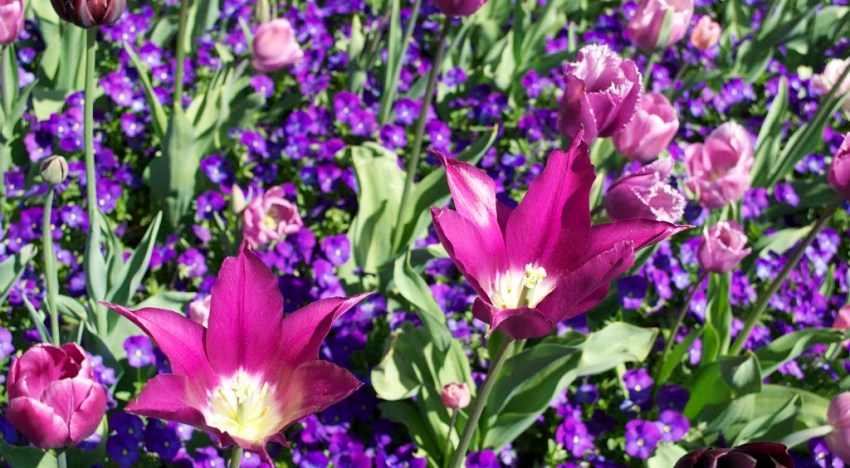 The New York Botanical Gardens: Up Close and Personal