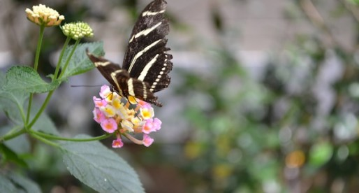 Beauties of the Bronx Zoo: The Butterfly Garden
