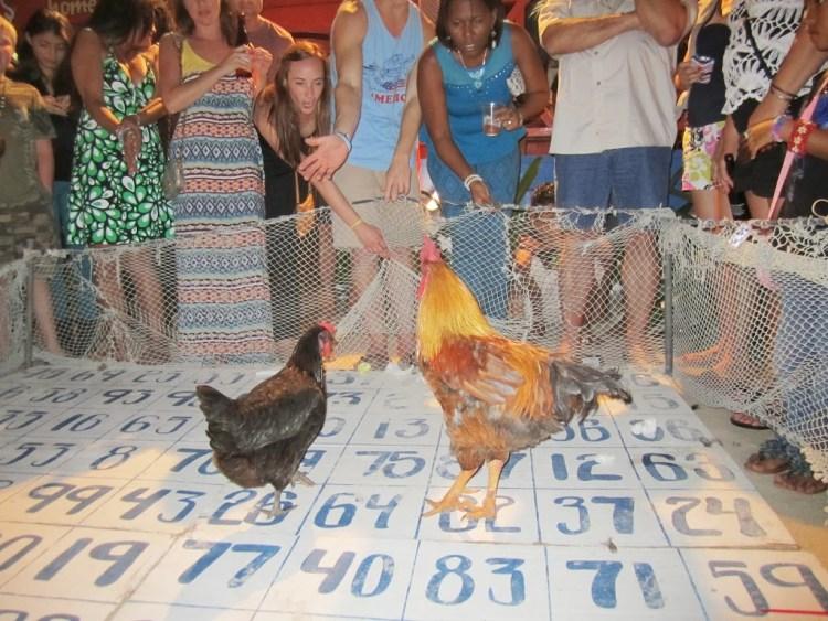 chickens san pedro belize