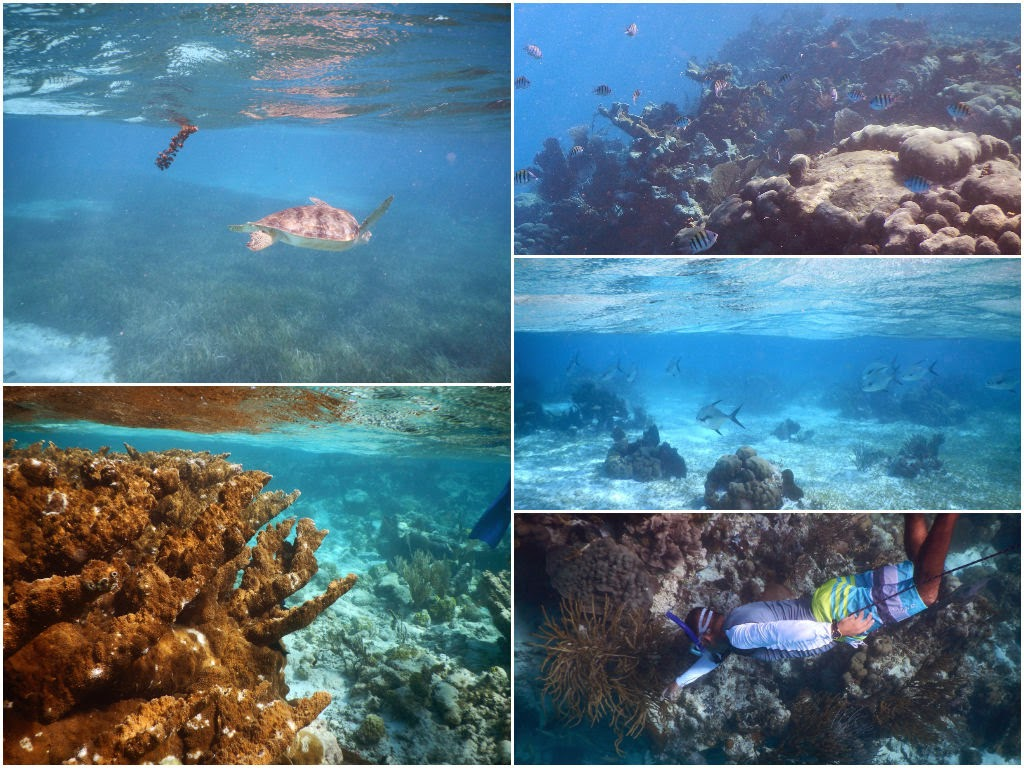 snorkeling san pedro belize
