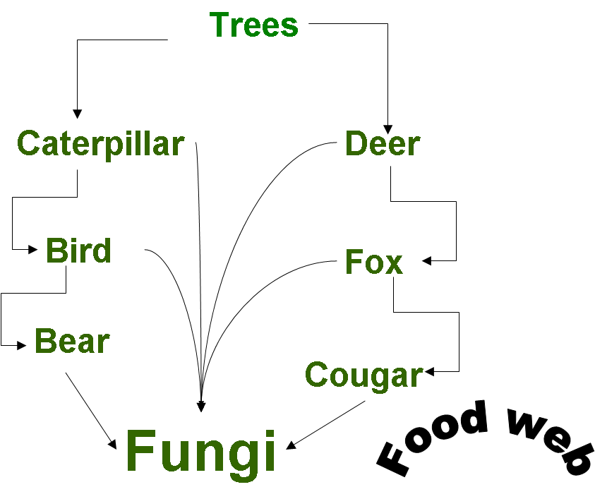 diagram of the temperate forest