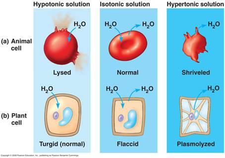 Labs - AP Biology