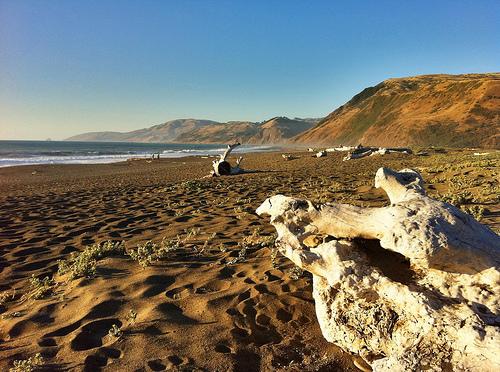 Kid-friendly Tide Pools in California Trekaroo