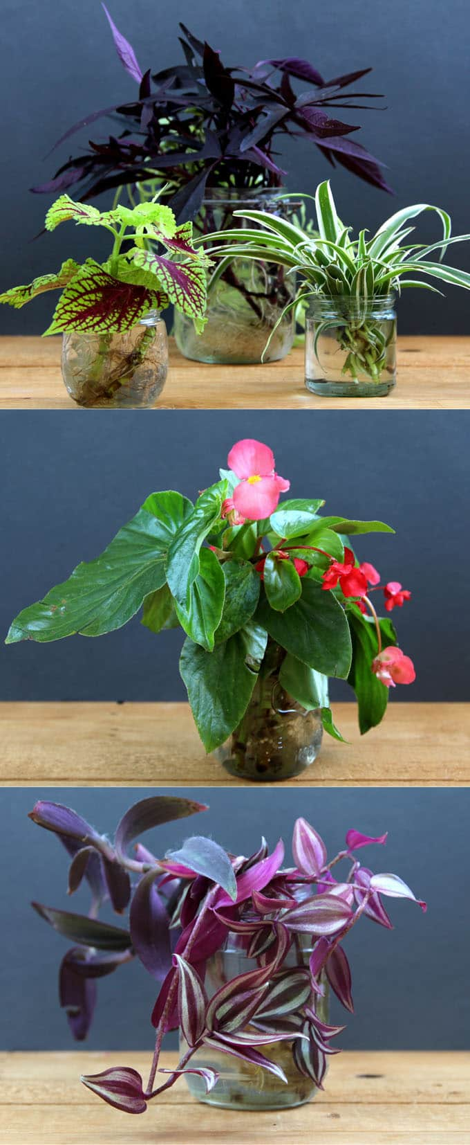 Indoor Plants For Low Light 12 Easy Air Purifying Indoor Plants For Beauty Well Being A