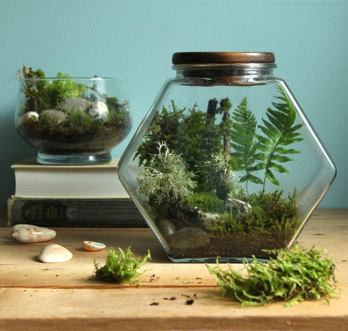 Beautiful Diy Terrarium In 3 Easy Steps No Care For 3