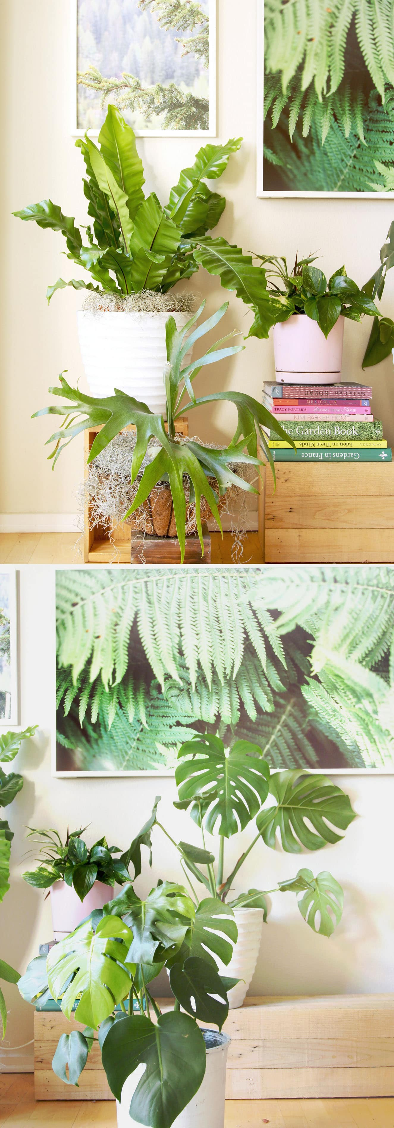 Good Large House Plants Best Indoor Plants Top Good Indoor Plants Best Indoor