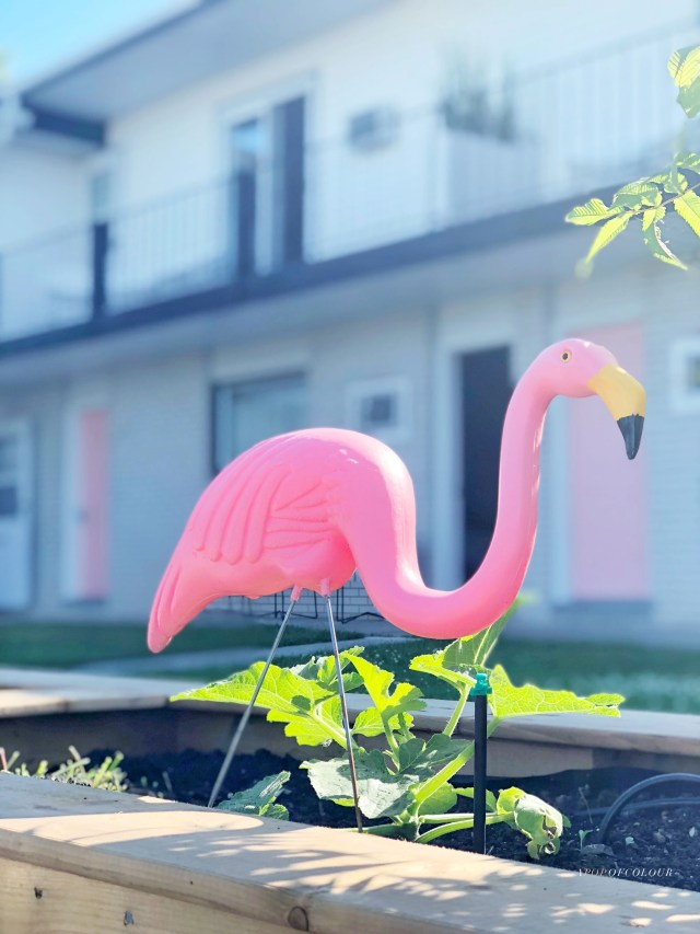 Flamingos in front of The June Motel