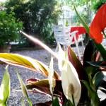 Particolare del giardino sotto la veranda
