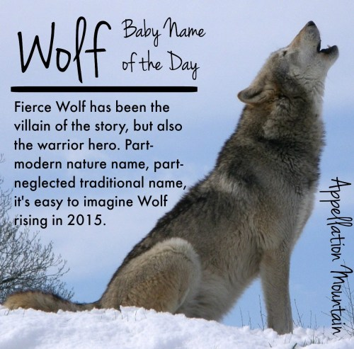 Medium Of Male Wolf Names