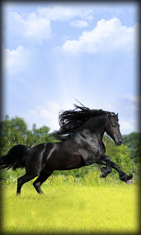 3d Grass Live Wallpaper Apk  Horse Live Wallpaper Free Android Live Wallpaper Download