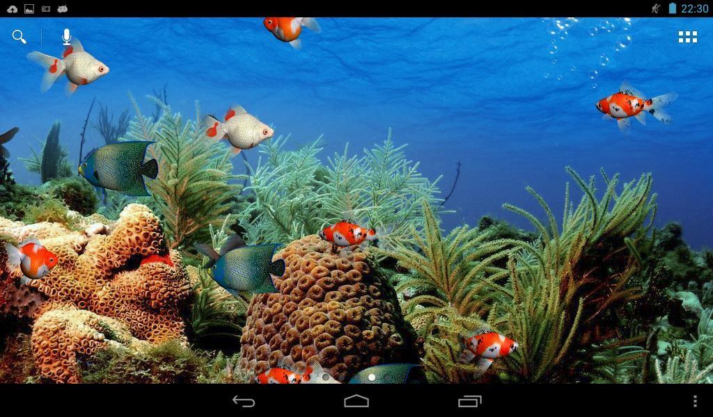 Download Wallpaper Aquarium 3d Bergerak Koi Fish 3d Screensaver And