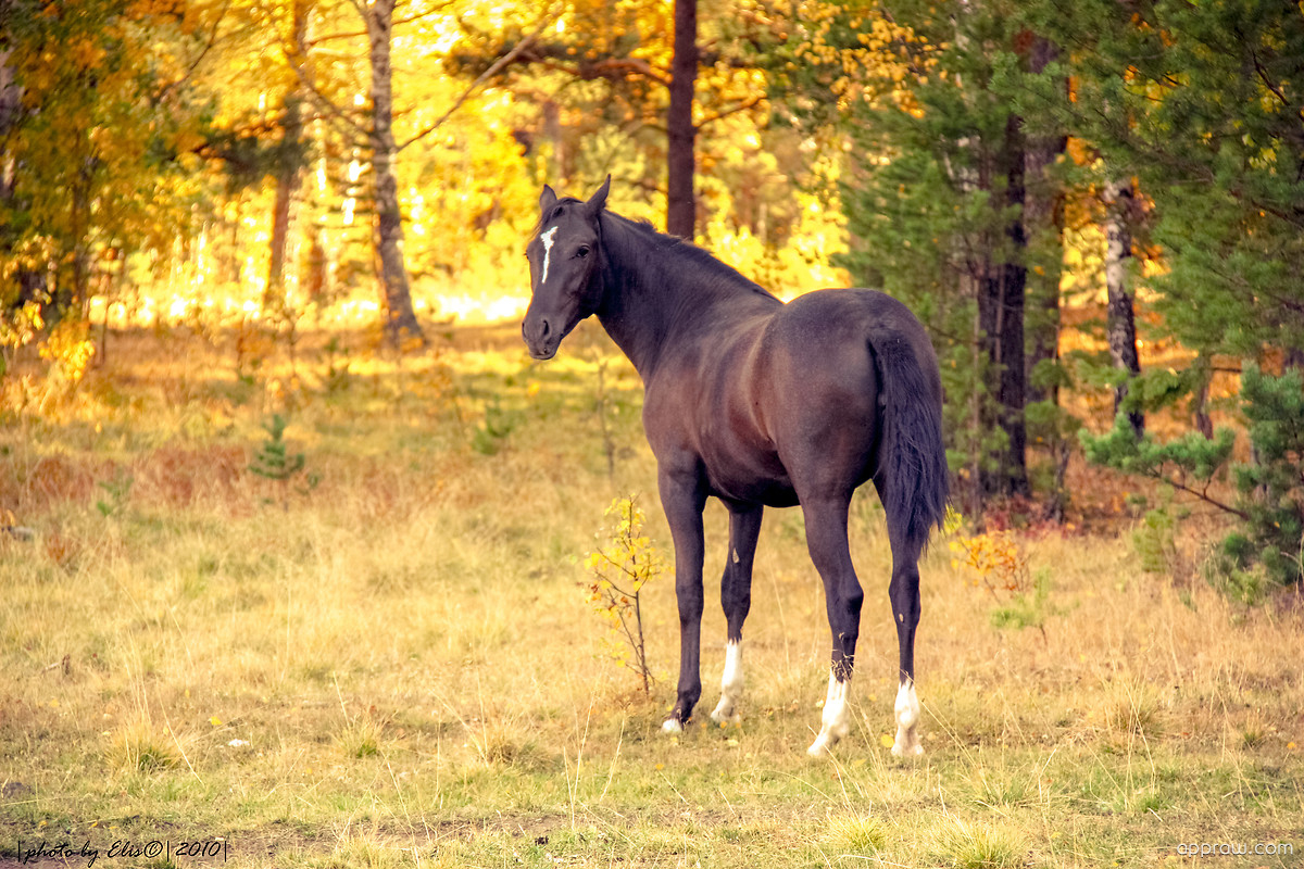 Cute Live Wallpapers Free Download For Android Autumn Horse Wallpaper Download Horse Hd Wallpaper Appraw