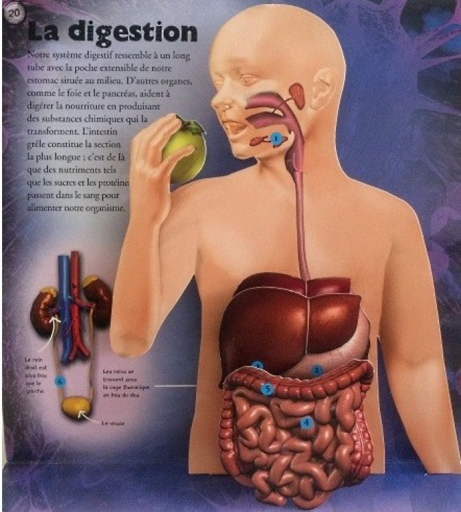 la-digestion-livre-corps-humain