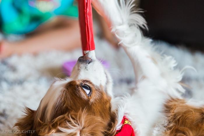 Pup peroni play