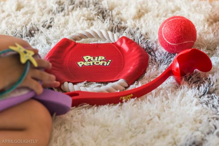 Pup peroni cavalier -9374