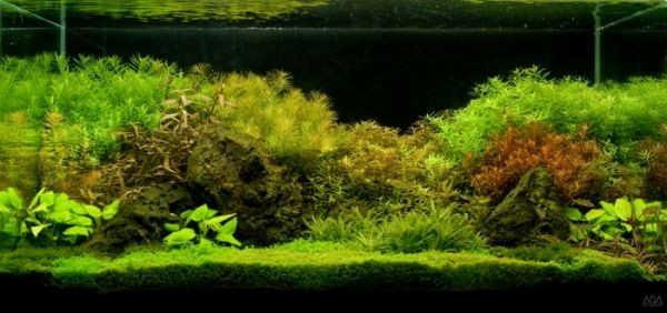My ADA 90-P aquarium with a mineralized soil substrate