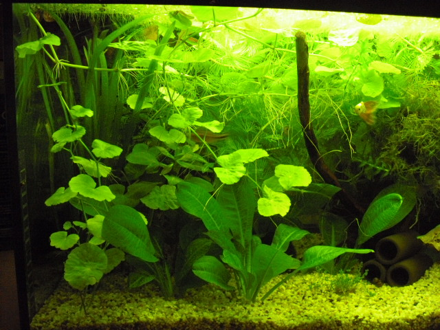 Community Mein Aquarium Aqua4you De - Aquarium Groß