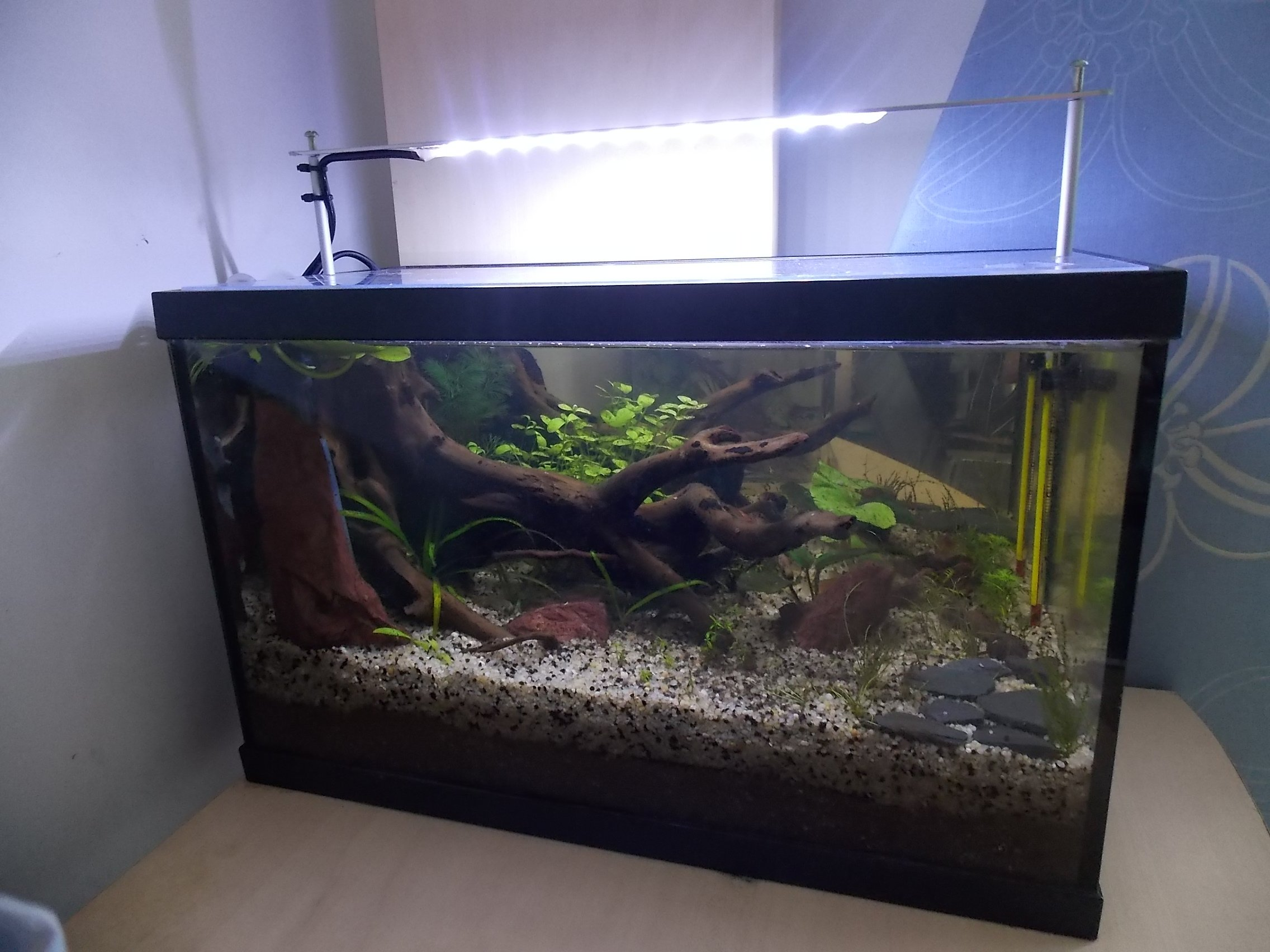 éclairage Led Maison Eclairage Led Maison Aquarium Ventana Blog