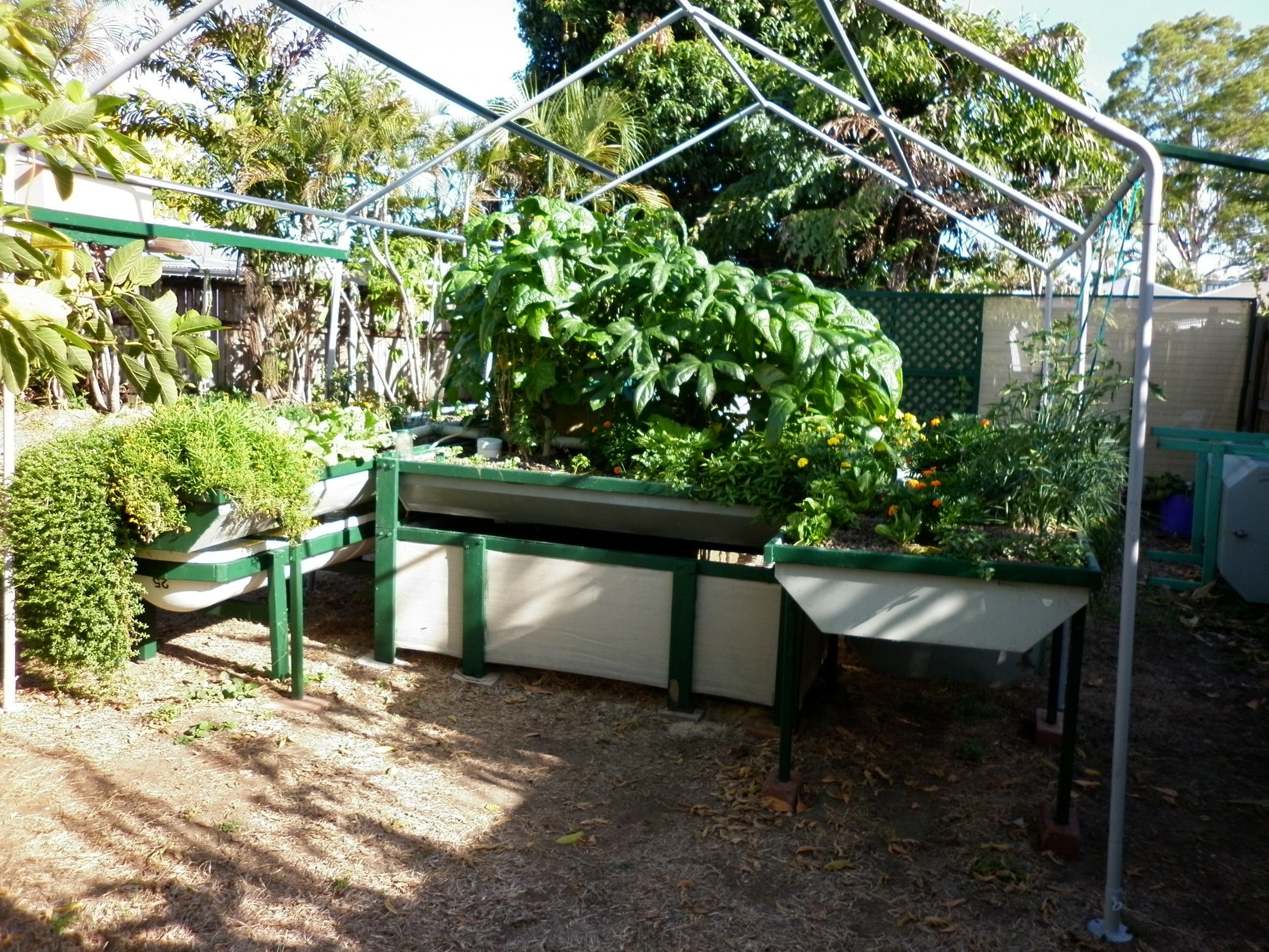 Beds Cairns Aquaponics In North Queensland Apuaponic Kits And Wicking Beds