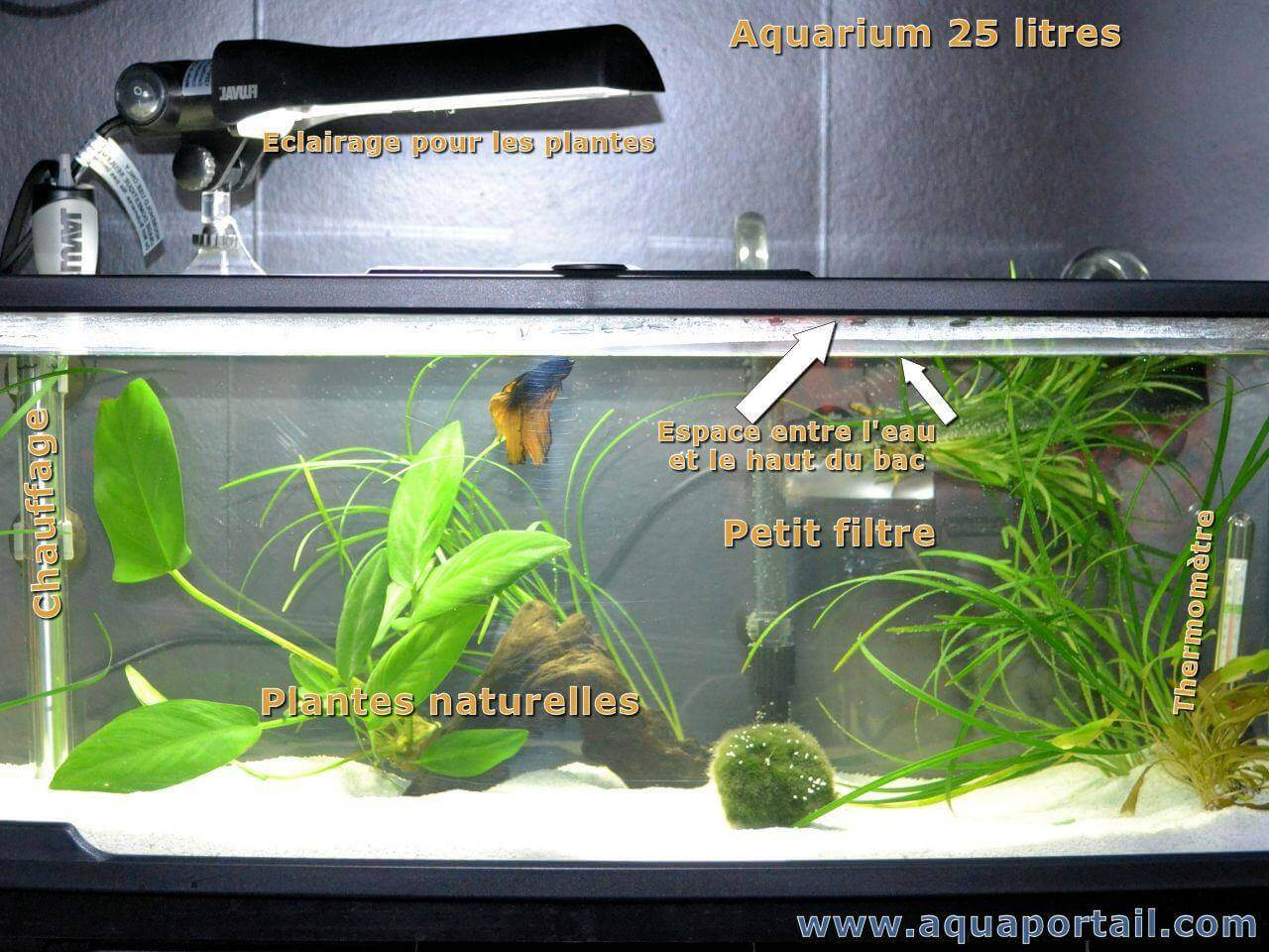 Décoration Aquarium Pour Combattant Poisson Combattant Aquarium Alimentation Photos