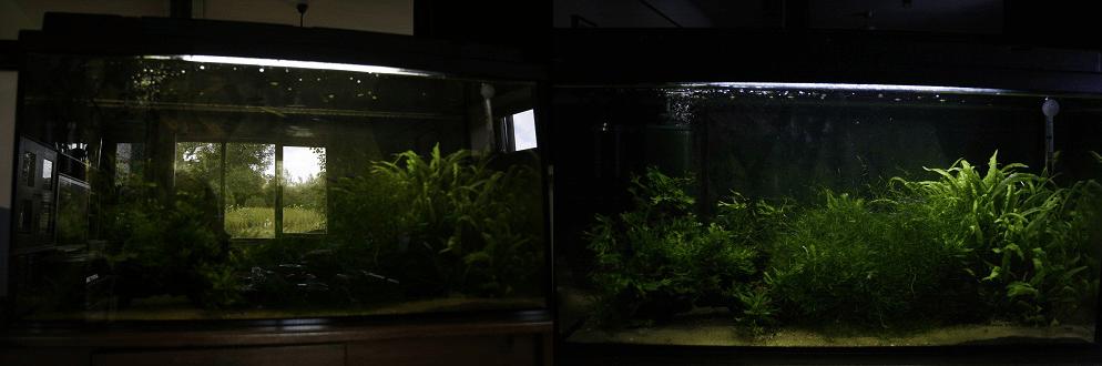 aquariumfotografie