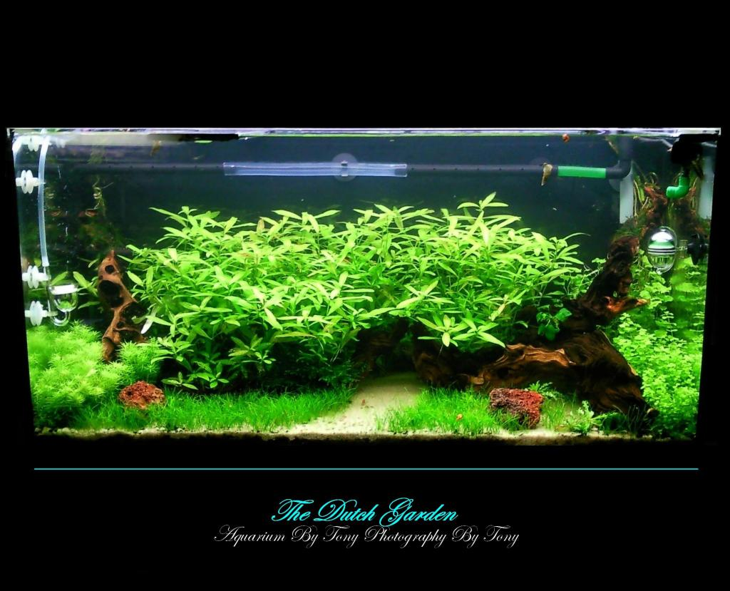 Rampe Eclairage Aquarium 80 Cm Aquarium The Dutch Garden Par Fasciatum