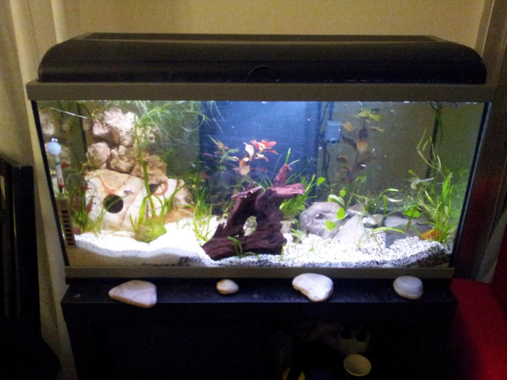 Rampe Eclairage Aquarium 80 Cm Aquarium Vallée Mythologique Par Grom971