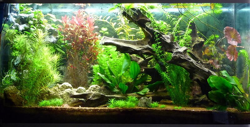 Terrasse En Tech Aquarium : Amazonia Led Par Shan_aya