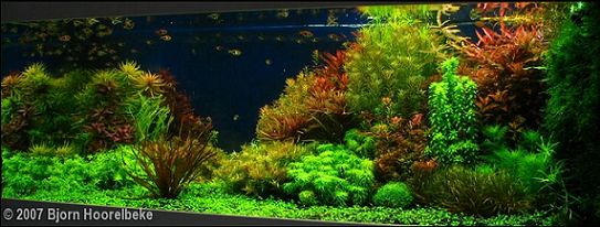 Eclairage Led Aquarium Nano Aquascaping