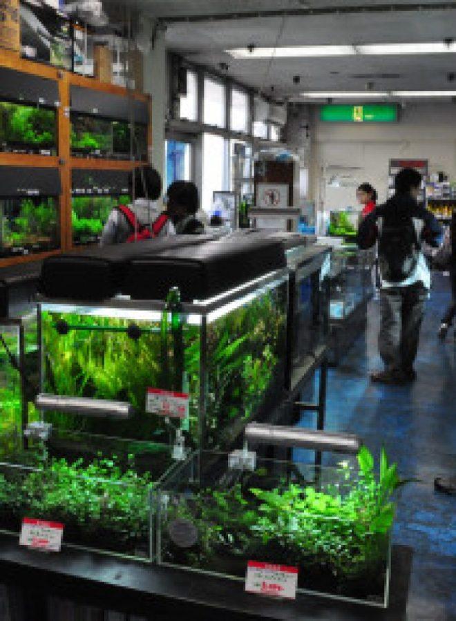 cropped-aquarium-shop.jpg
