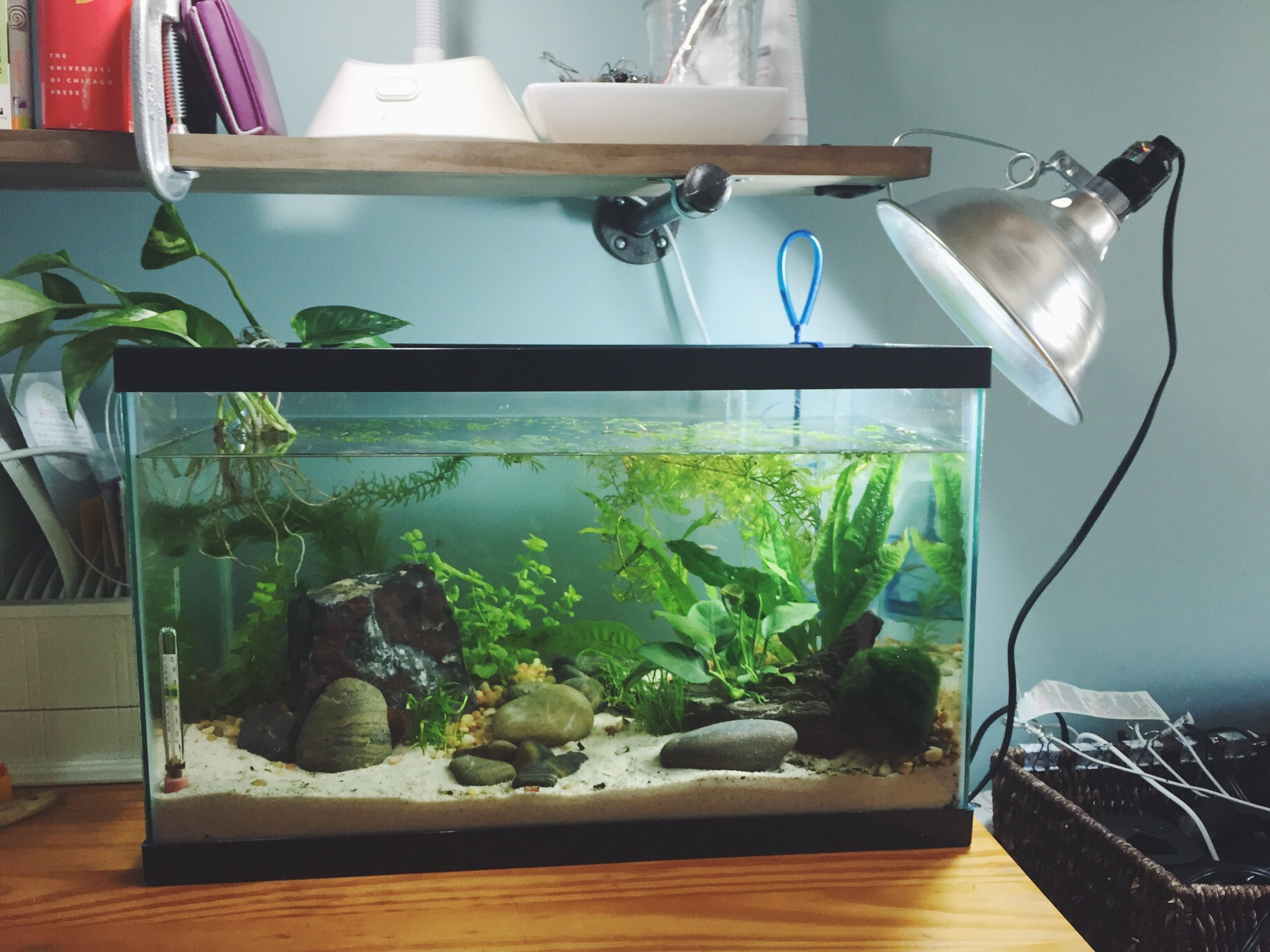 Aquarium fish tank reading - So After Reading A Ton About Planted Tanks And Walstad Tanks In Particular I Realized The Reason I Never Really Got Any Readings For Nitrites And Nitrates