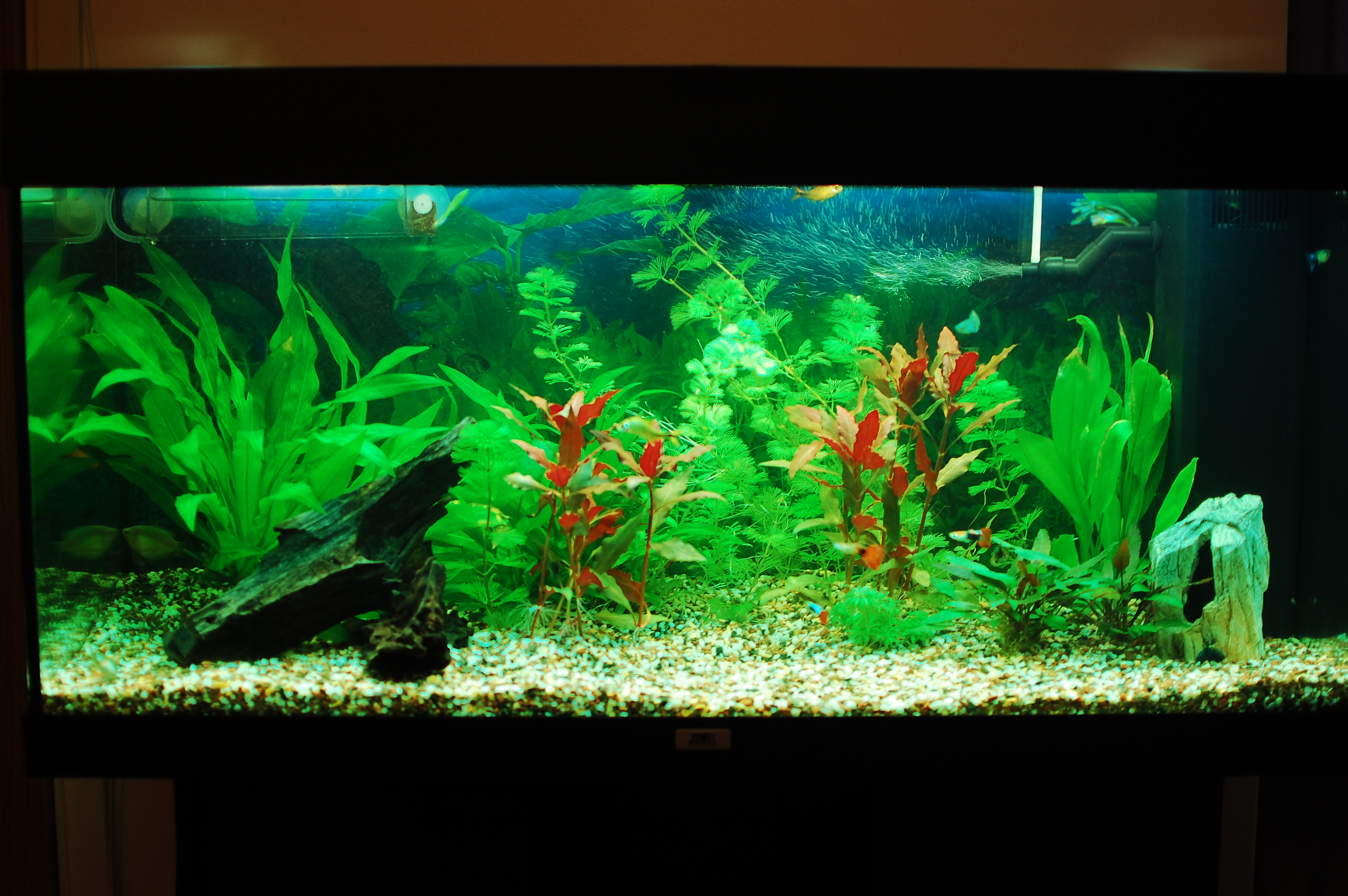 Aquarium Einrichten Ideen Tropical Aquarium Ideas Aquarium Addicts Anonymous